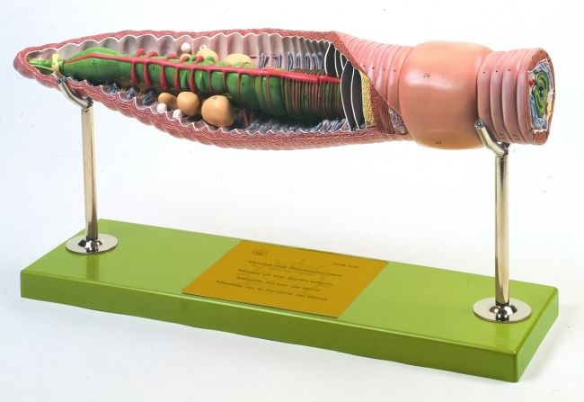 Modell Regenwurm