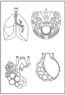 Skizzenblätter Biologie des Menschen,Teil II Stoffwechsel,  Medienpaket