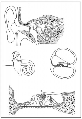 Skizzenblätter Biologie des Menschen -Teil III Steuerung, Medienpaket